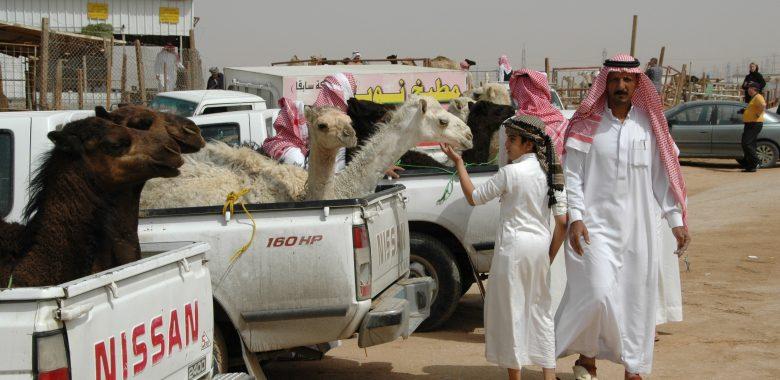 Saudi-Arabien Reisen Kamelmarkt