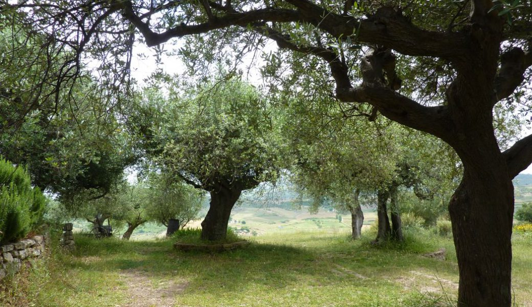 Albanien Reisen mit Orientaltours - Apollonia