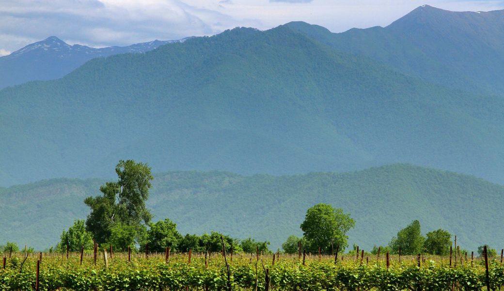 Georgien vineyards in Kakheti 72 dpi