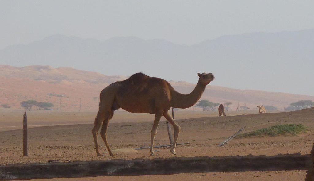 Oman 21