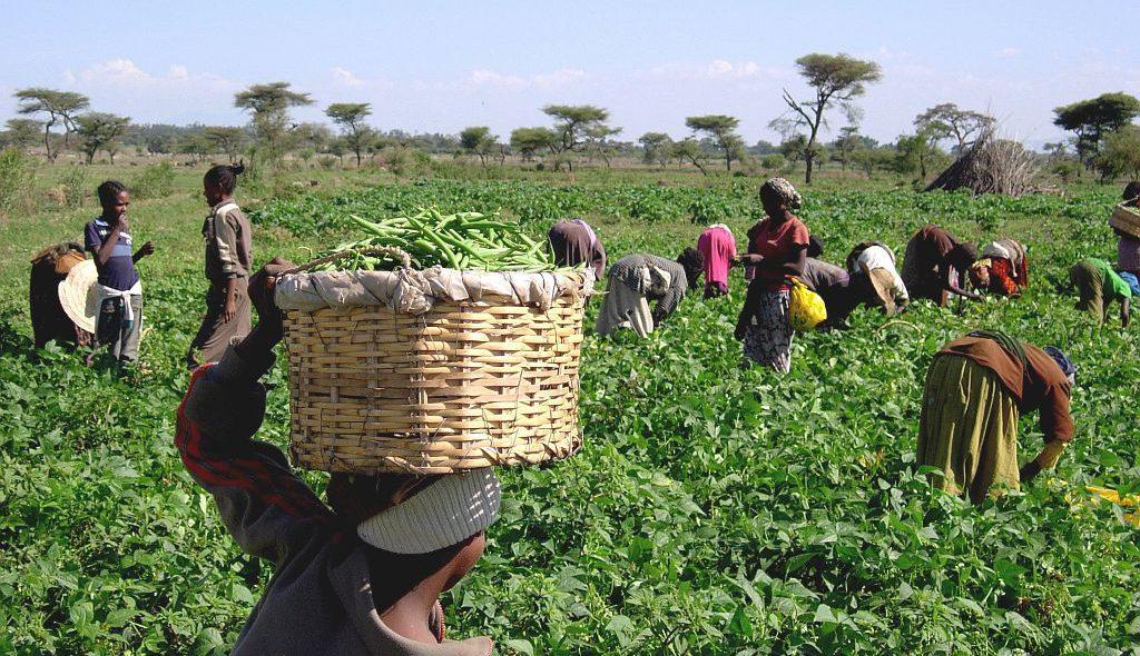 Äthiopien-033-1024px.jpg