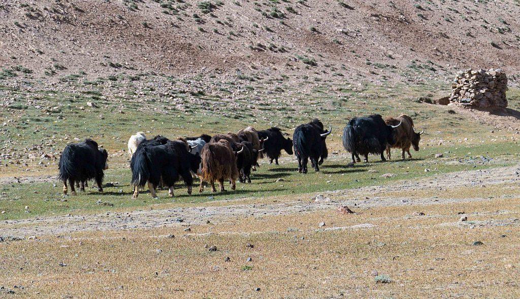 Tadschikistan 027 1024px